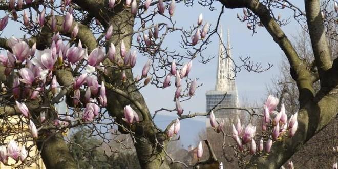 Piasevoli,magnolije