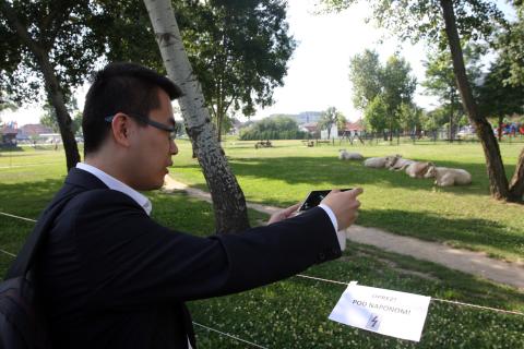 Krave na livadi pokraj Ministarstva poljoprivrede