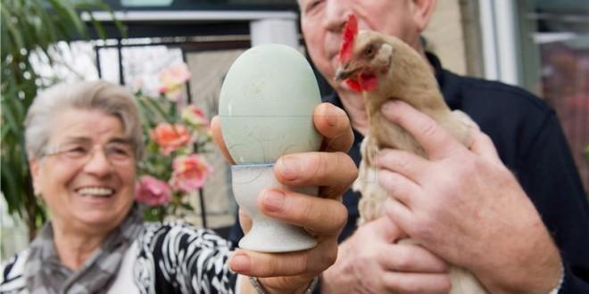 kokoš i jaje