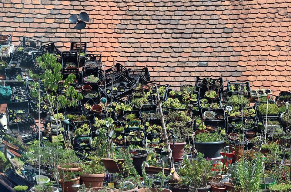 Vrt na krovu kuće - Prigorski.hr