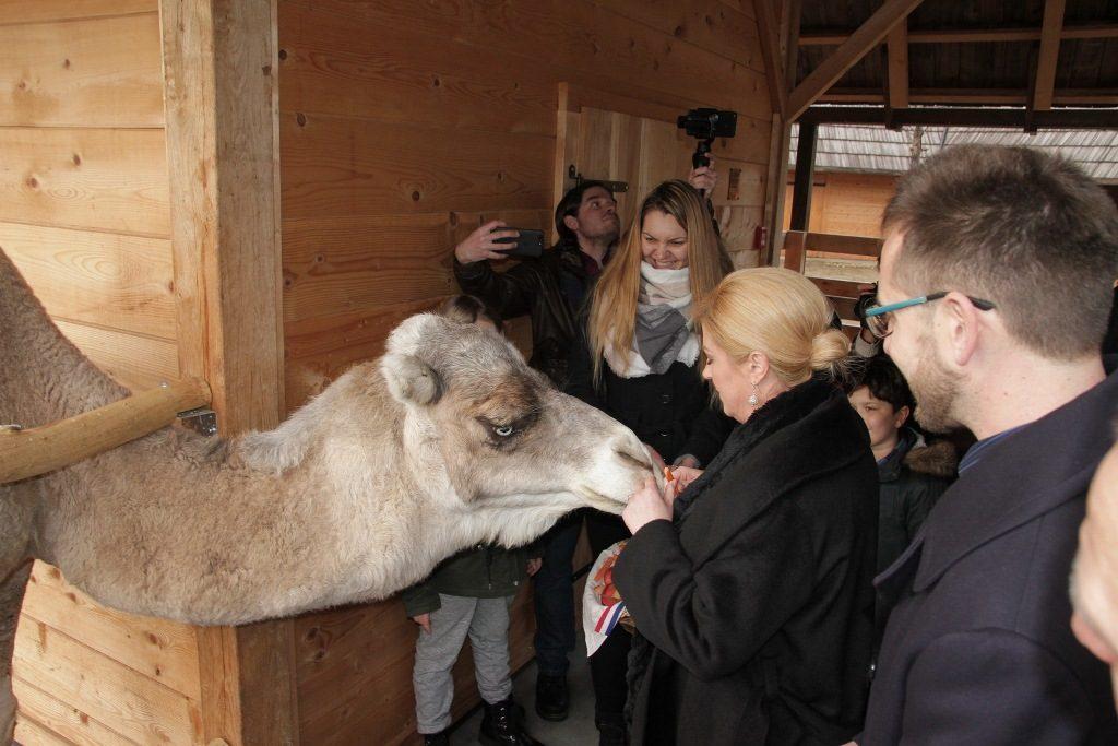 Đurđevac: Predsjednica posjetila deve, utvrdu Stari grad te se družila s osnovnoškolcima i građanima na trgu
