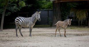 foto: zoo.hr