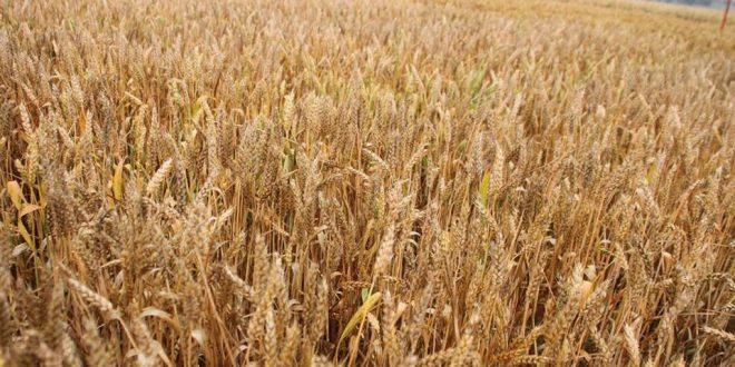 poljoprivredni