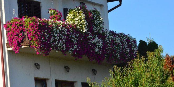 cvijece9