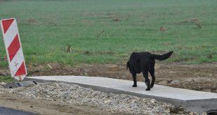 Napušteni psi brojnim građanima stvaraju probleme/Foto: G. Obran