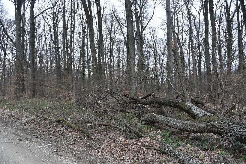 DOLIJAO TROJAC Krali drva u šumama na vrbovečkom području