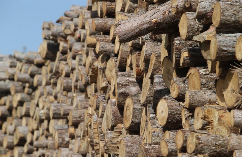 Srušili i otuđili stabla hrasta, bukve, graba i johe