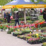 Raspisan Javni poziv za sudjelovanje u manifestaciji Križevci u cvijeću