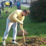 I ove godine akcija sadnje stabala u Križevcima