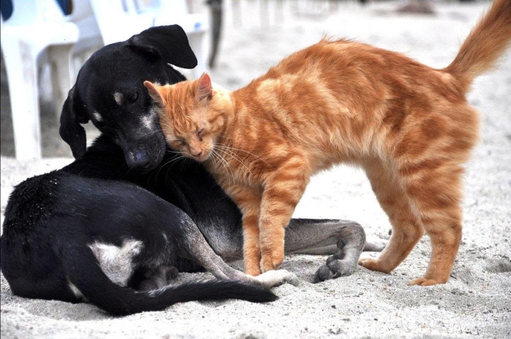 Obilježavanje Svjetski dan kastracije: 'Prekomjerno razmnožavanje pasa i mačaka glavni uzrok napuštanja životinja'