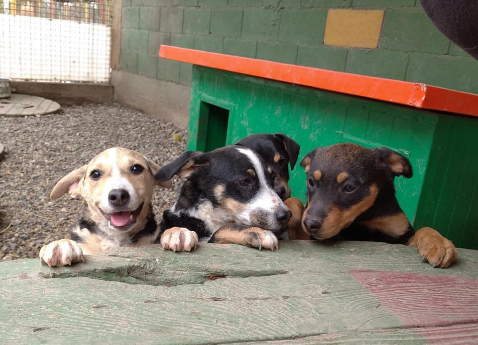 Kako udomiti psa i mačku u vrijeme koronavirusa: Prijatelji životinja donose upute za udomljavanje životinja tijekom pandemije