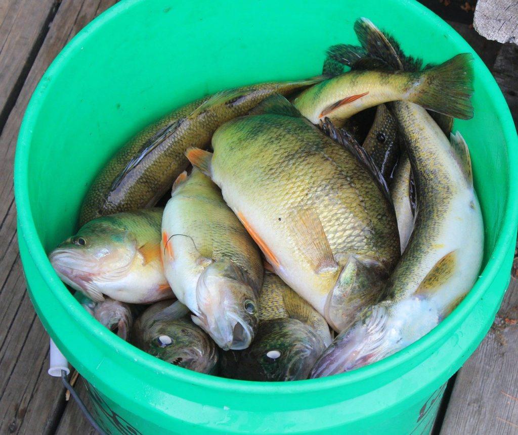 Prijatelji životinja apeliraju na okončanje uzgoja i izlova riba te zaštitu oceana i morskih ekosustava