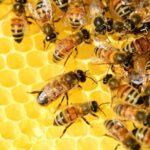 Ludbreg: Prinosi manji, a prodaja meda veća