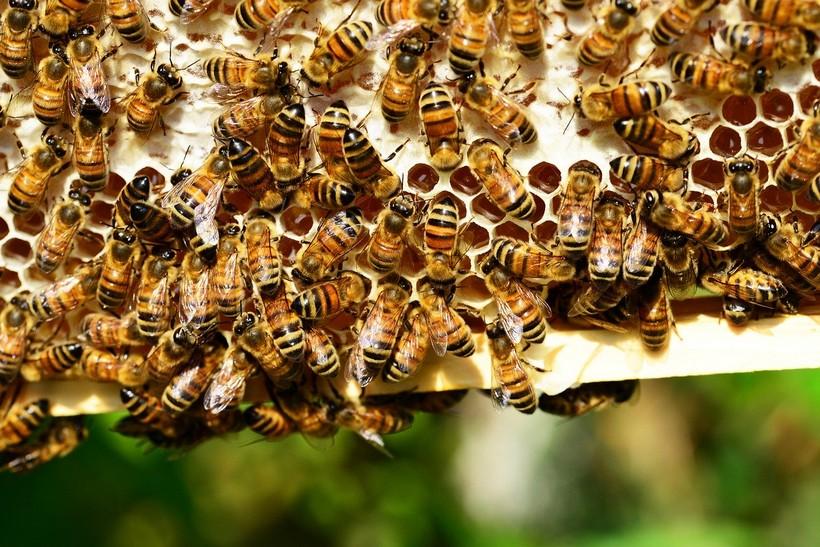 Pomoć pčelarima na potresom pogođenom području Pounja