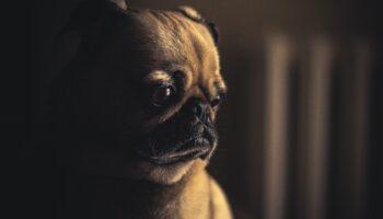 Zbog salmonele povučena smrznuta hrana za pse proizvođača Natures Menu