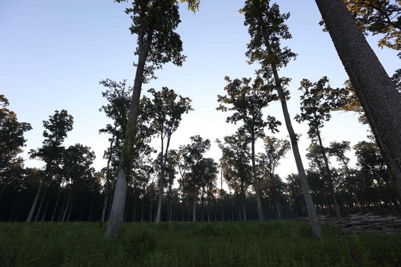 WWF: Od 2004. uništeno najmanje 43 milijuna hektara prašuma