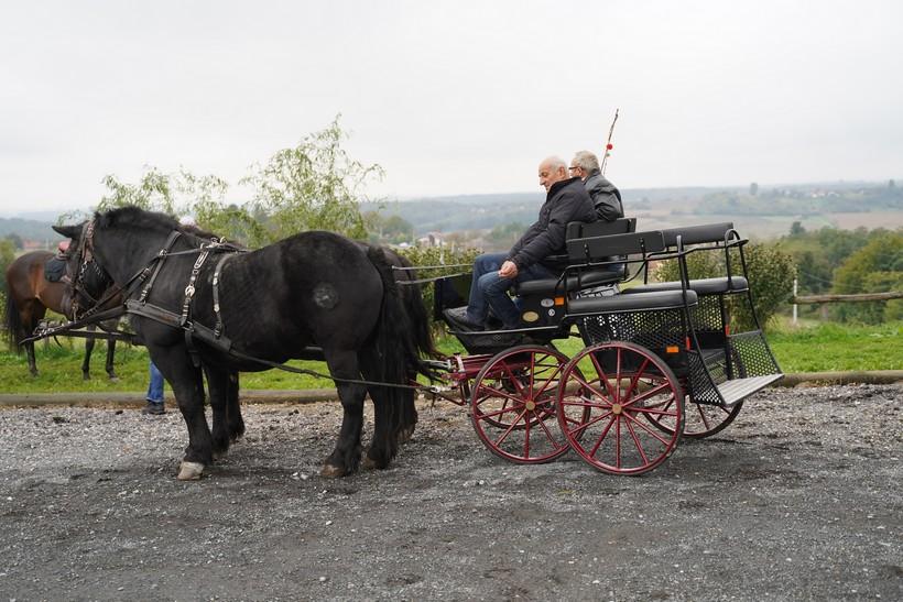 bjelovar konj (10)