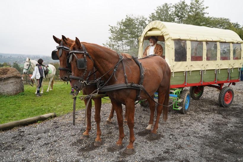 bjelovar konj (11)