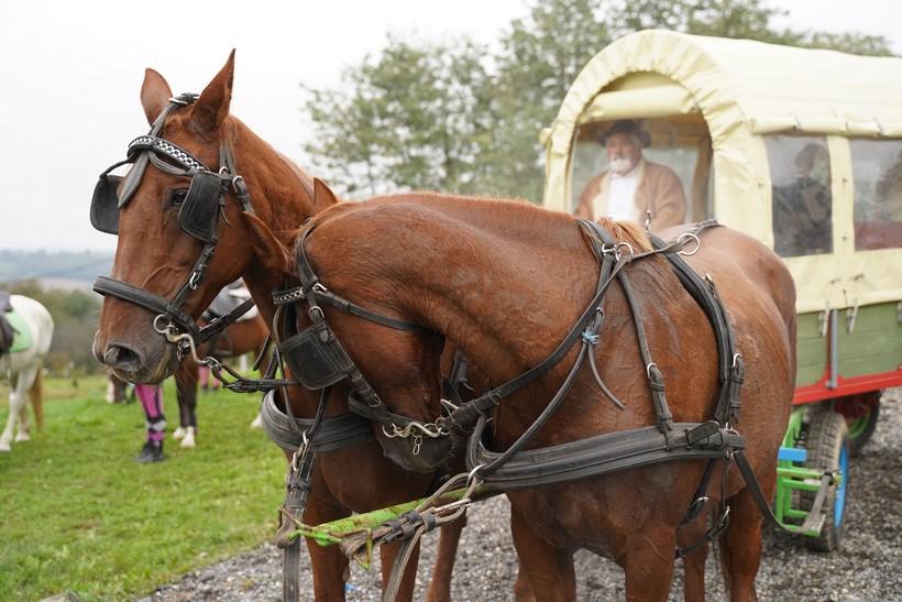 bjelovar konj (12)