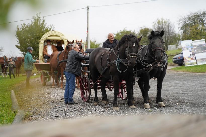 bjelovar konj (39)
