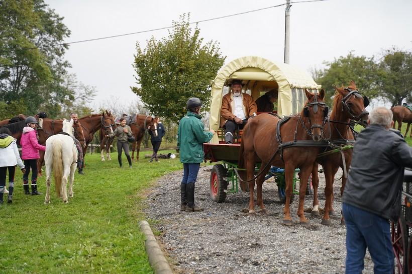 bjelovar konj (40)