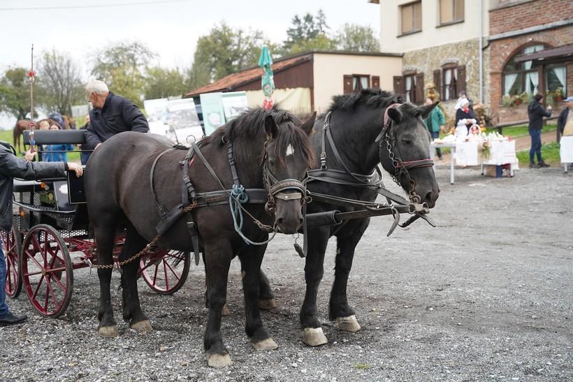 bjelovar konj (41)