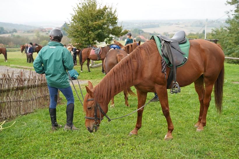 bjelovar konj (46)
