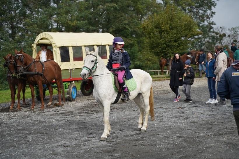 bjelovar konj (50)