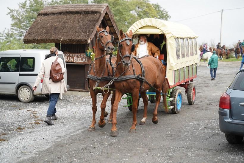 bjelovar konj (52)
