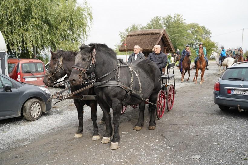 bjelovar konj (53)
