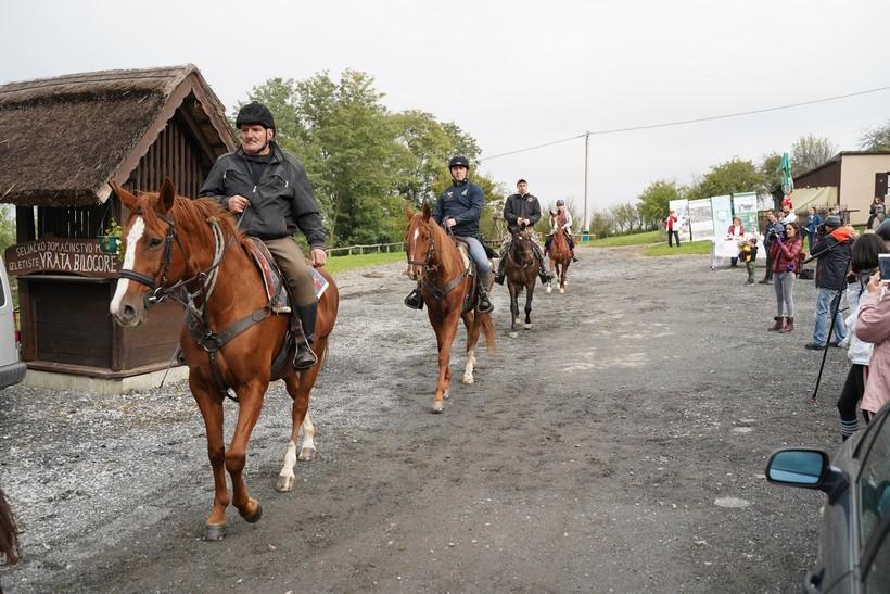 bjelovar konj (56)
