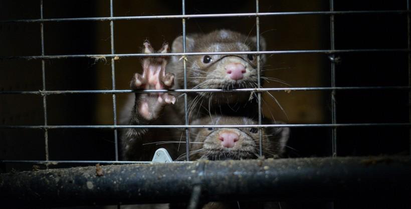 Prijatelji životinja reagirali: 'Ne ubijajte životinje zbog korone'