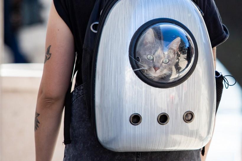 Mačak u torbi – doslovno!
