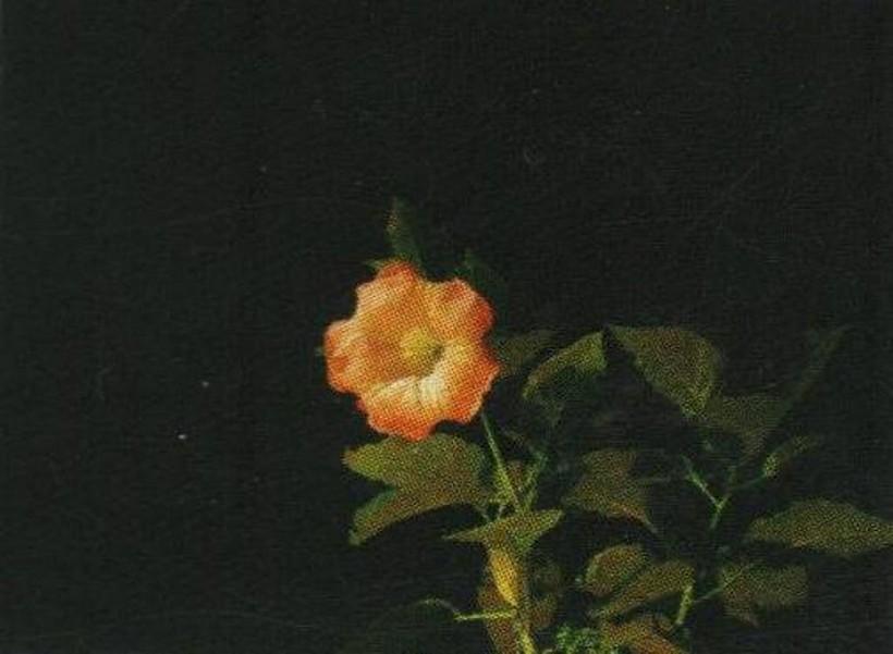 Slika-619