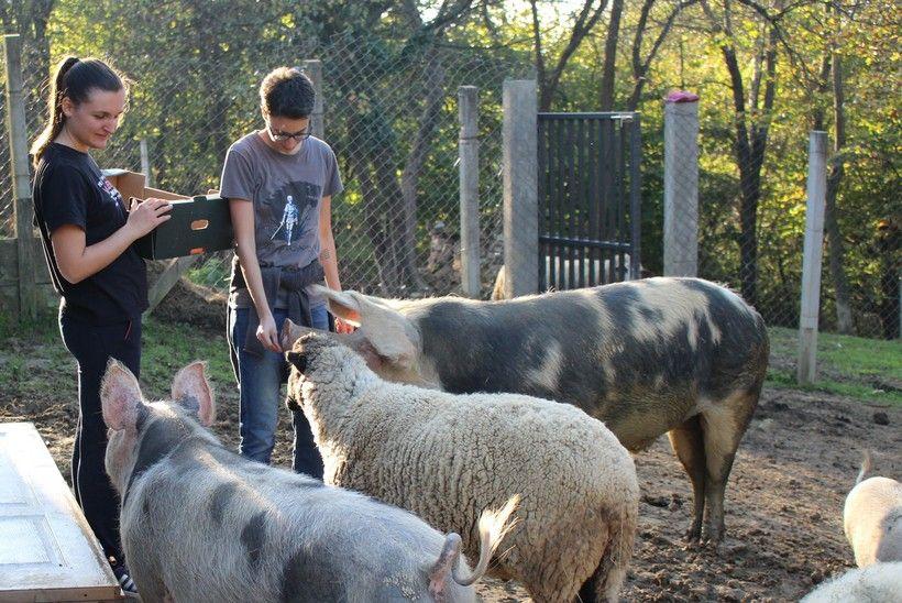 Farma kod Vrbovca koja spašava životinje treba pomoć: 'I najmanji iznos nam puno znači'