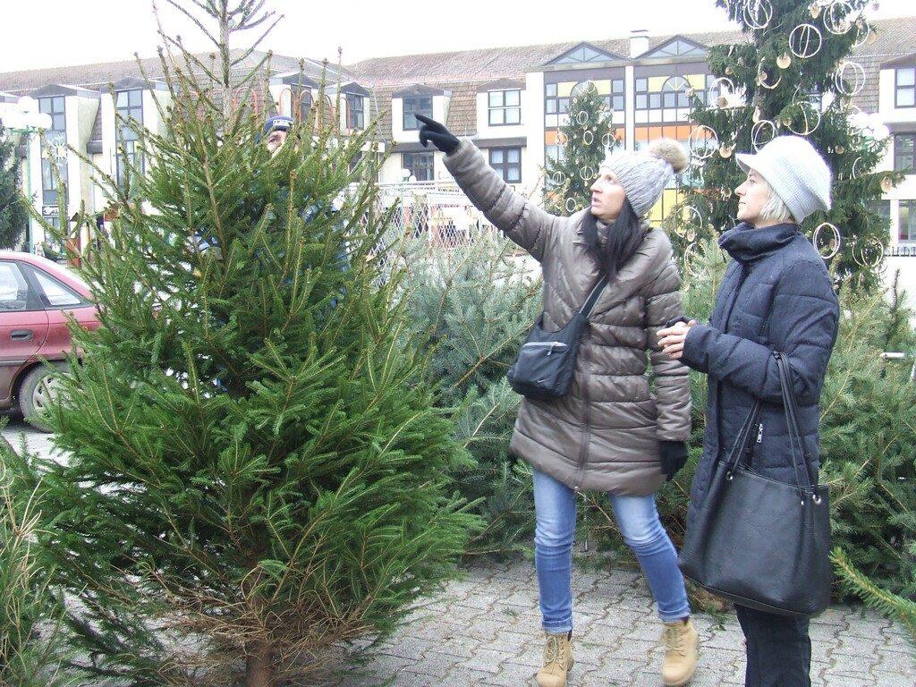 Poziv Đurđevčanima: 'Donirajte božićno drvce za ukrašavanje grada'
