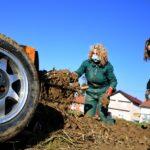 """[VIDEO] U Ludbregu započelo vađenje čuvene sorte hrena """" Hren je debeo i odlične kvalitete"""""""