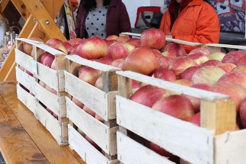 U subotu podjela jabuka uz prikupljanje donacija za pomoć Koprivničancima