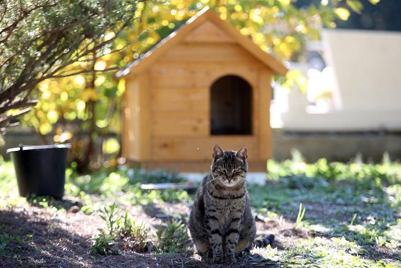Mačak koji živi na gradskom groblju dobio je svoju drvenu kućicu
