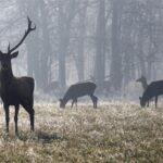 MONSTRUOZNO Odrezali glavu s rogovima jelenu; ostalo ostavili