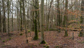 Oštetio šumariju za 10.000 kuna; ukrao je tri stabla hrasta i stablo bukve