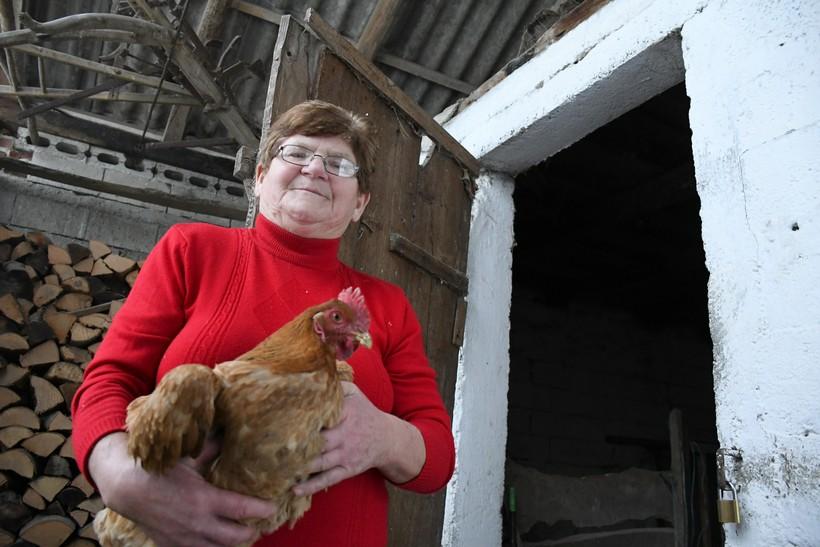 🎦 Ivka iz malog podravskog sela ostala bez kokoši: 'Lopovi su došli u noći i uzeli ih skoro sve'