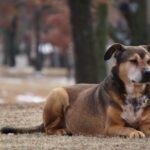Vjeran pas pred bolnicom šest dana čekao vlasnika