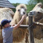 Đurđevačke deve i životinjska ekipa s veseljem Vas očekuju