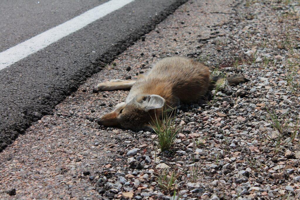 OPREZ VOZAČI Lisica na autocesti