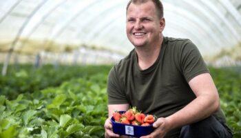 🎦 Prve ovosezonske jagode spremne su za berbu