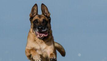 Pas napao poštara; vlasnici naplaćena novčana kazna