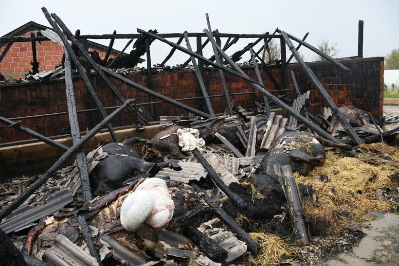 Stara Ploščica: U požaru na OPG-u Marinković izgorjela stoka