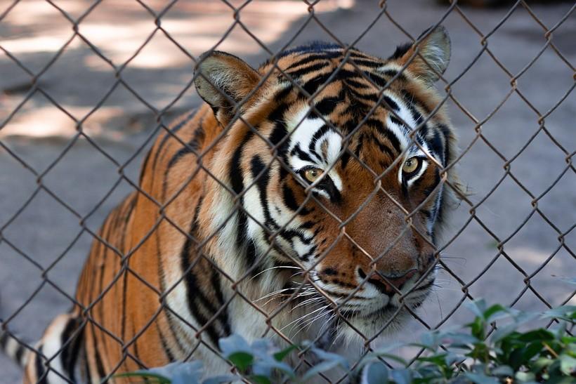 Prijatelji životinja pokreću novu kampanju: 'Životinje postaju psihički bolesne zbog držanja u zatočeništvu'