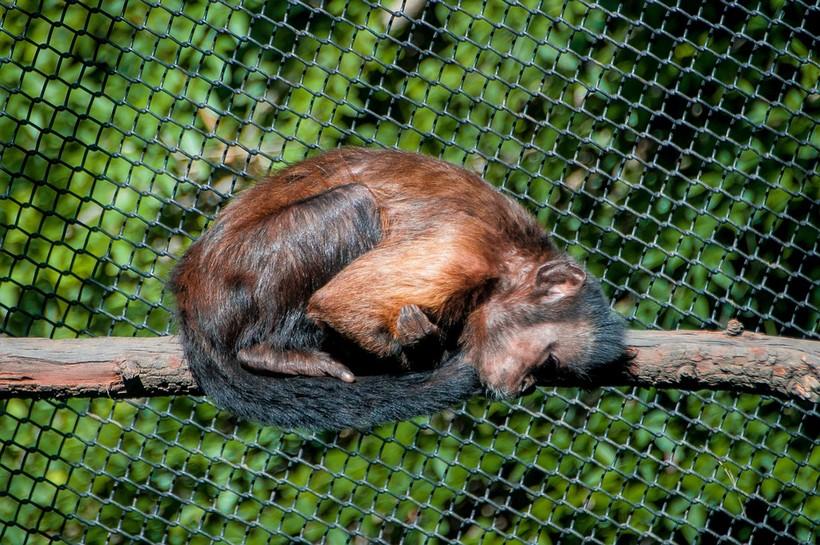 majmun u zoološkom